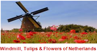 Windmill, Tulips & Flowers of Netherlands