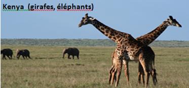 Kenya (girafes, éléphants)